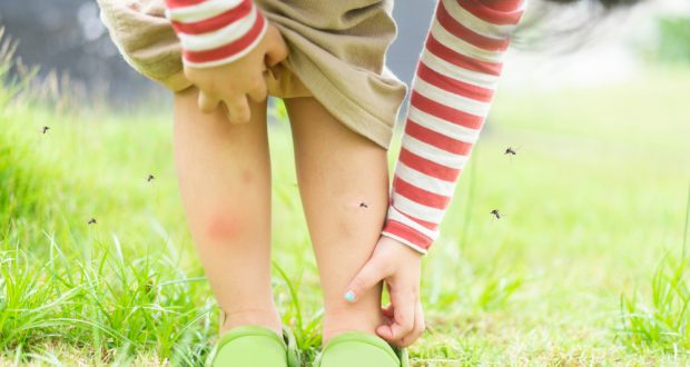5 Common Diseases You Can Acquire From Mosquitoes